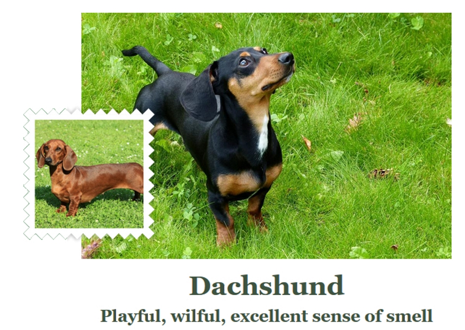 Dachshund_Fetch1